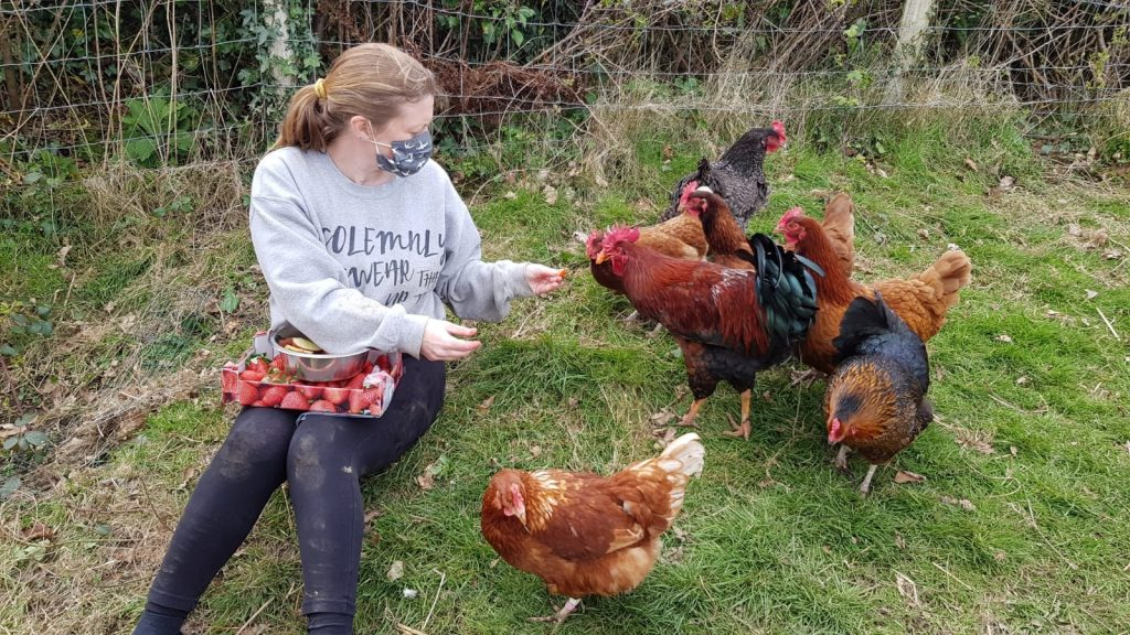 We rescue, rehabilitate and re-home animals.